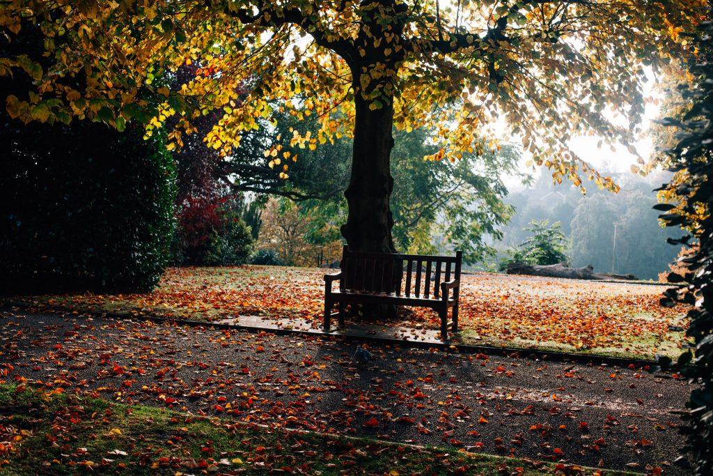 Chester Grosvenor Park In Autumn