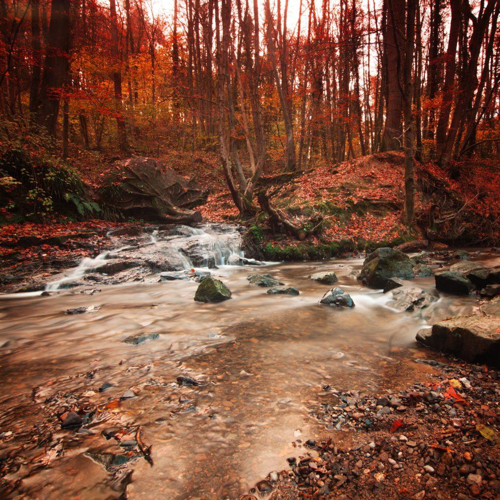 Wepre Woods in Autumn