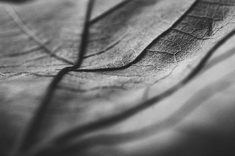 30 Day Autumn Photography Challenge #clicksphotochallenge